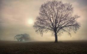 Картинка поле, деревья, туман, дерево, утро