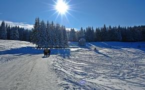 Картинка winter, snow, cold