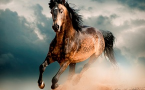 Картинка Лошадь, конь, мустанг, скакун, пустыня, галоп