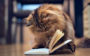Картинка кошка, котенок, игра, пол, блокнот, книга, страницы, Daisy, Ben Torode
