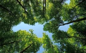 Картинка зелень, лес, листья, деревья, природа, nature, кроны, tilt-shift