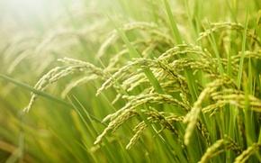 Картинка лето, трава, фон