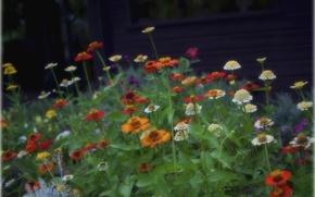Картинка поле, листья, цветы, луг, клумбв