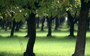 Обои природа, деревья, леса, дерево, лето, трава, парки, весна