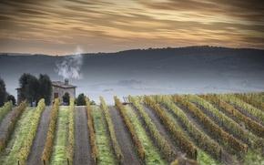 Картинка пейзаж, природа, tuscany