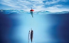 Обои рыба, поплавок, рыбалка, Вода
