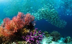 Картинка море, рыбы, кораллы, косяк, Подводный мир