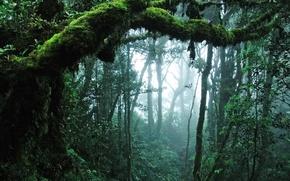 Картинка листья, деревья, природа, джунгли
