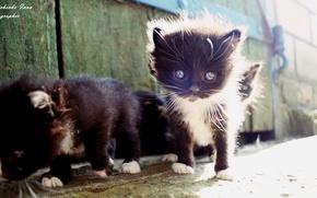 Картинка котенок, черный, украина