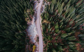 Картинка лес, природа, камни, вид сверху, деревья.дорога