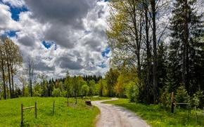 Картинка зелень, лето, трава, облака, green, дорожка, grass, clouds, Summer, path