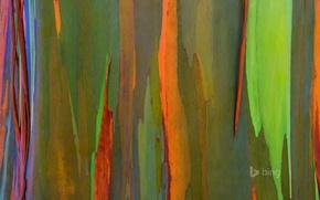 Картинка природа, дерево, цвет, Гавайи, кора, Мауи, радуга эвкалипт