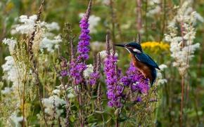 Картинка цветы, птица, зимородок