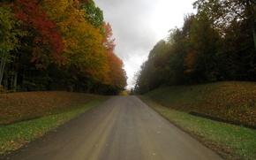 Картинка дорога, осень, листья, деревья, Nature, листопад, road, trees, ряды, autumn, leaves, fall