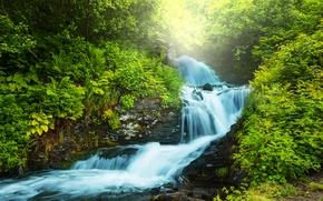 Картинка зелень, лес, река, поток, папоротник