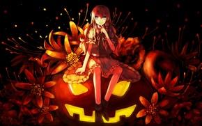 Картинка девушка, цветы, праздник, аниме, арт, тыква, halloween, touhou, kirisame marisa, dead line