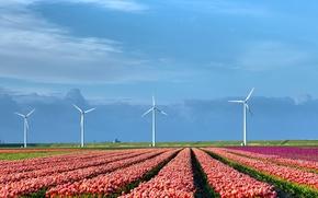 Картинка поле, природа, тюльпаны, ветряки