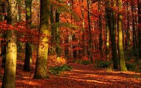 Обои деревья, осень, лес, природа
