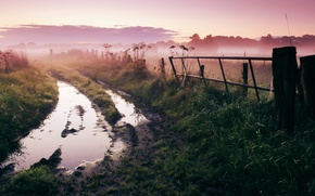 Картинка дорога, природа, туман, утро