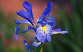 Обои краски, лепестки, экзотика, цветок, природа