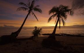 Обои sunset, wave, summer, philippines, ocean, beach, palm