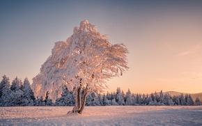 Картинка зима, снег, дерево, елки, утро