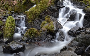Картинка река, камни, мох, поток