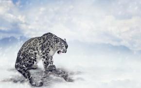 Обои боке, хищник, снег, горы, снежный барс, облака, Ирбис