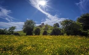 Картинка небо, облака, деревья, цветы, Англия, холм, луг, England, лютики, Сомерсет, Burrow Mump, Burrowbridge, Somerset, Барроубридж