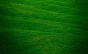 Обои поля, свежесть, зелень, поле, природа, трава травка, травичка