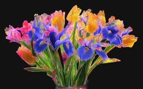 Картинка цветы, краски, букет, ирис, тюльпан, линии