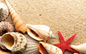 Картинка песок, море, звезда, ракушки