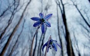 Картинка макро, цветы, природа, весна, подснежники, пролески