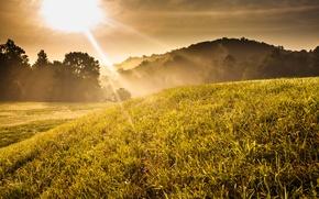 Картинка трава, деревья, закат, туман, восход, холм, солнечно