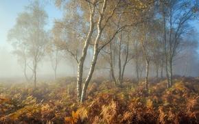 Картинка осень, природа, туман, утро