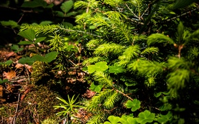 Картинка Nature, Earth, Green, Summer, Forest, Leaves, Plants, Woods, Growth