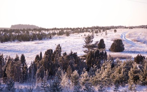 Картинка зима, дорога, лес, трава, снег, деревья, природа, красота, Morgendorffer