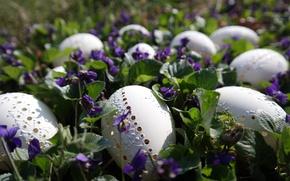 Картинка цветы, природа, праздник, яйца, весна, Пасха, фиалки