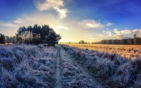 Картинка иней, дорога, поле, осень, утро