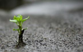 Картинка земля, росток