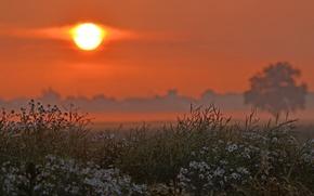 Картинка солнце, цветы, дерево, Поле