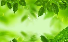 Картинка листья, вода, природа, отражение