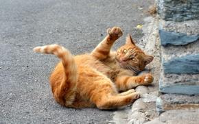 Картинка кошка, кот, рыжий, лежит