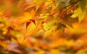 Обои жёлтые, макро, настроение, осень, листья