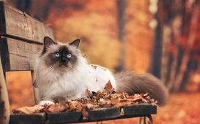 Картинка осень, кошка, листья, скамейка, парк