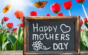 Картинка цветы, праздник, бабочка, тюльпаны, доска, поздравления