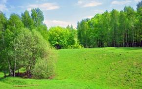 Картинка поле, лес, пейзаж, зеленый