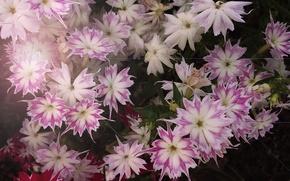 Картинка цветок, цветы, растение