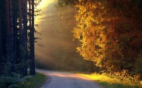 Обои path, forest, light