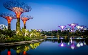 Картинка вода, деревья, дизайн, огни, отражение, вечер, залив, Сингапур, кусты, сады, Gardens by the Bay
